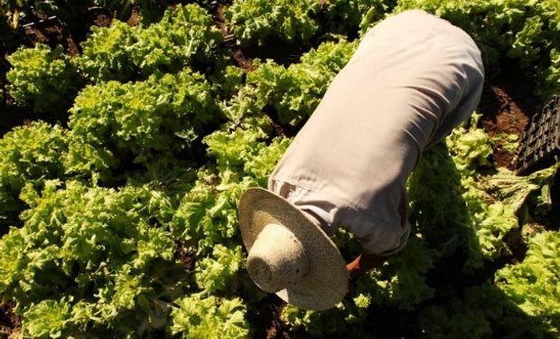 Informe sobre la licencia parental del trabajador rural.