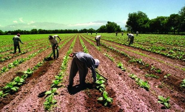 Higiene y Seguridad en el Régimen Agrario: aspectos a tener en cuenta