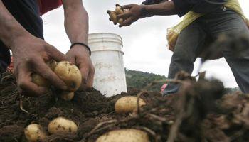 Todo lo que tenés que saber sobre la remuneración en el Régimen Agrario