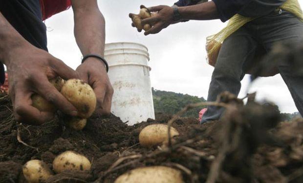 La remuneración del trabajador agrario ha sido objeto de importantes cambios.