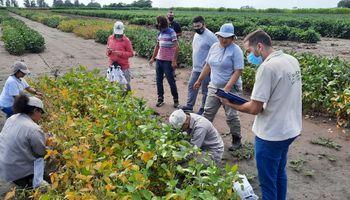 Trabajadores rurales: el Gobierno autoriza a beneficiarios de planes sociales a tener empleo registrado