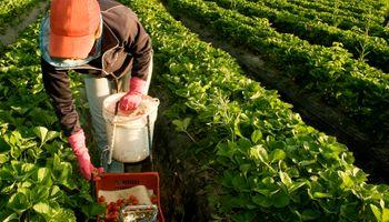 Los detalles del bono extraordinario para trabajadores rurales