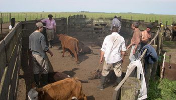 Acuerdo salarial: anunciaron un aumento para los trabajadores rurales permanentes