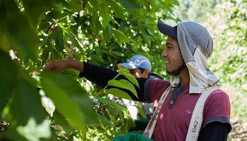 Trabajadores rurales: cómo cobrar la prestración por desempleo a través de cuenta bancaria