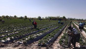 Trabajadores rurales: en mayo aumenta un 48% la prestación por desempleo