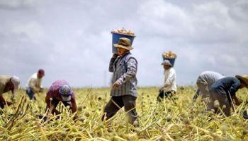 Bono de fin de año para trabajadores permanentes del ámbito rural
