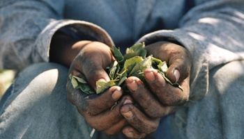 Santa Fe reafirma su compromiso para erradicar el trabajo infantil en el sector agropecuario