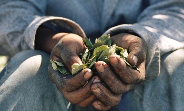 Su foco está puesto en las provincias de Buenos Aires, Santa Fe y Mendoza, con particular énfasis en tres sectores productivos: ajo, algodón y tomate.