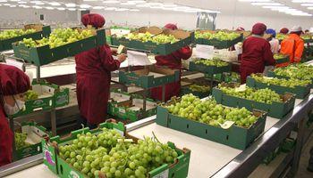 Estiman que el agro genera 2,7 millones de puestos de trabajo