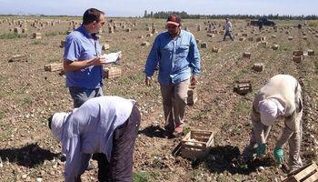 En el último año el sector agropecuario argentino creó 6.900 empleos formales