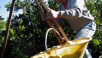 Mirá las modalidades contractuales vigentes para la actividad agraria