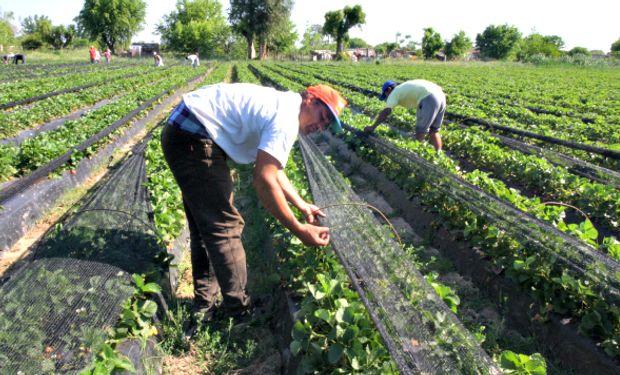 """El ámbito al que se aplica la solidaridad es amplio aludiendo a la """"actividad agraria""""."""