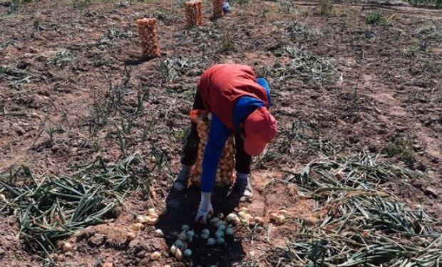Detectaron trabajo infantil prohibido en un establecimiento hortícola en Santiago del Estero