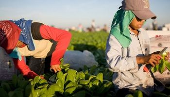 Régimen Agrario: trabajo infantil y protección del trabajo adolescente