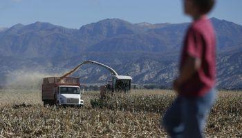 Trabajo infantil y adolescente en el ámbito rural: detalles de las pautas que fija la ley