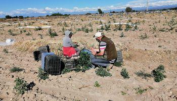 Mendoza: detectan 7 niños en situación de trabajo infantil en establecimientos rurales