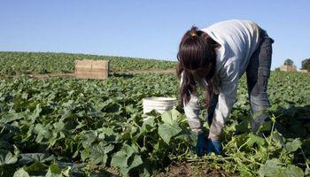 Aumento en las prestaciones por desempleo en el ámbito rural: requisitos para su cobro