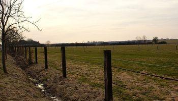 Alquiler de campos: por el clima se fijan a hectárea cosechada