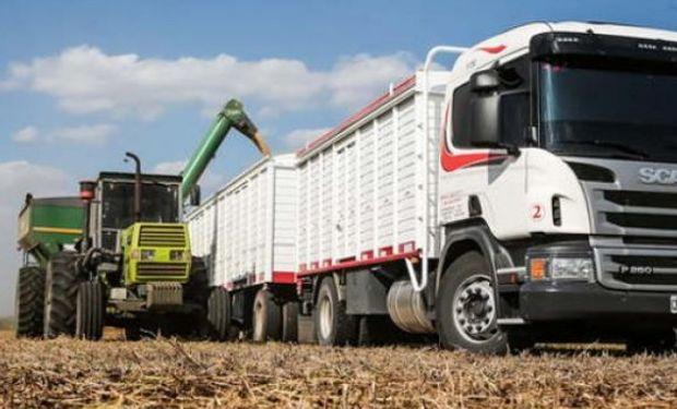 Representa el 31% del cereal cosechado en Río Cuarto.
