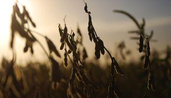 Transporte de granos: la próxima semana se comenzará a discutir la tarifa de referencia