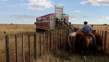 Habilitan la emisión del documento único de transporte electrónico para el traslado de hacienda en Chaco