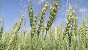 Córdoba lanzará un programa provincial de certificación agroecológica