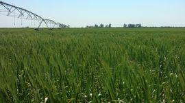 La falta de lluvias impacta en el centro del país, pero aún predominan las reservas óptimas de agua