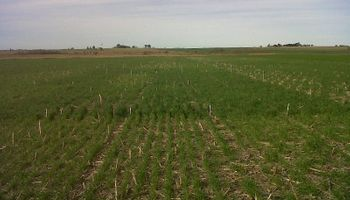 Recomendaciones de manejo para potenciar la producción de trigo