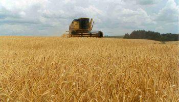 Estiman que la producción de trigo será de 15 millones de toneladas