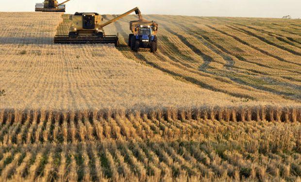 Mejores rindes en trigo y la siembra de soja en la recta final
