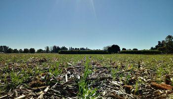 Trigo: las lluvias cayeron en el momento oportuno y la zona núcleo va por una producción récord