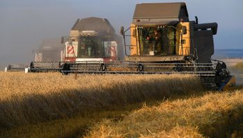 Fuerte suba: el trigo cortó la racha bajista en un mercado que sigue las retenciones que puso Rusia