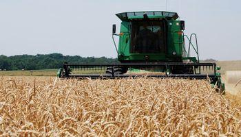 A pesar de los problemas, el trigo alcanzaría 4,25 Mt