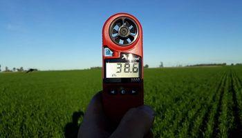 Fungicidas y bioestimulantes: la fórmula para aplicarlos de manera eficiente sobre el trigo y apuntar a 46 qq/ha