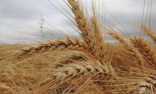 La decisión de Brasil presiona al precio del trigo argentino.