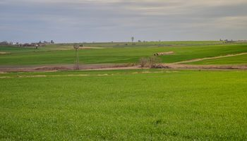 Impacto de la mayor superficie de trigo en el mercado de insumos