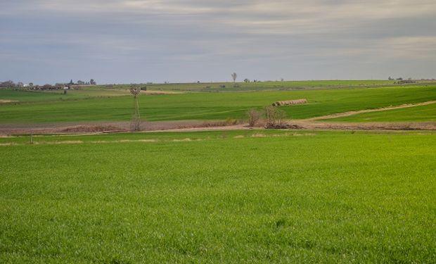 El área a sembrar con trigo podría ascender a 6,4 millones hectáreas, la tercer mayor superficie implantada de las últimas 20 campañas.