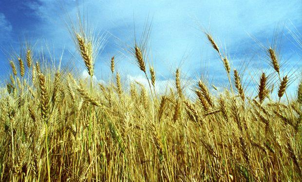 El desafío de aumentar la siembra de trigo y agilizar la venta de soja