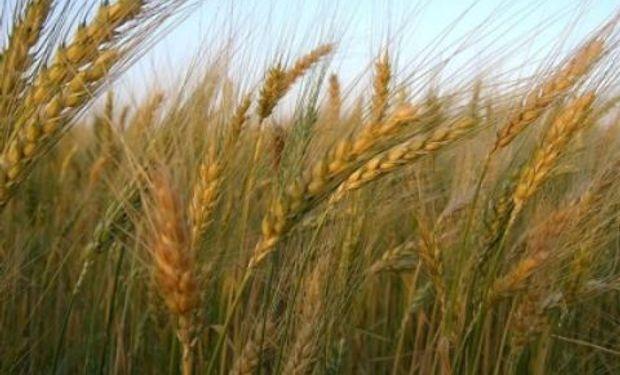 """Carlos Casamiquela: """"Habrá medidas para estimular la siembra de trigo"""""""
