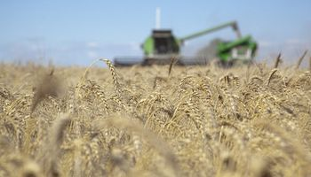 Casi un tercio de los negocios locales de trigo 2019/20 aún no tiene precio