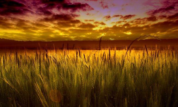 El gobierno comenzó en el año 2006 a intervenir la comercialización del trigo, buscando mantener bajos los precios de los alimentos