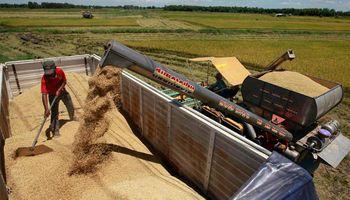 Gobierno liberó, poco, exportaciones de trigo. Son u$s 105 millones