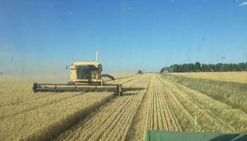 Buenos Aires: esperan un ingreso de U$S 2.580 millones por la cosecha fina