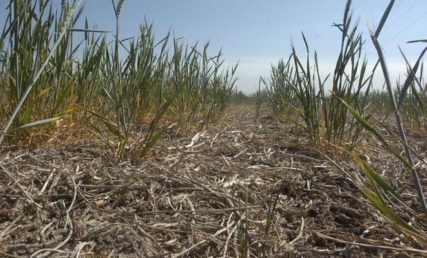 Santa Fe: las pérdidas por sequía superan $ 3.000 M