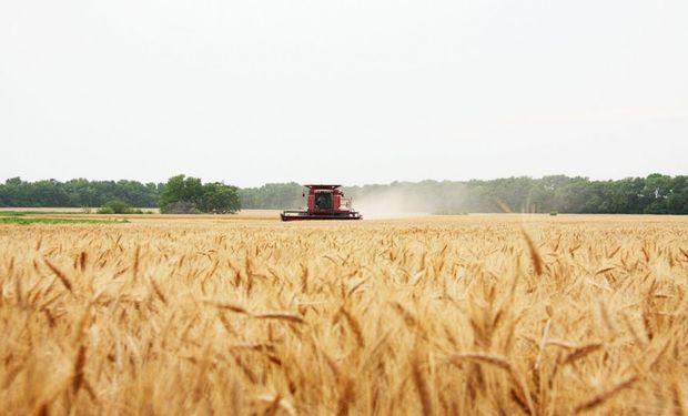 El uso de herbicidas inmediatamente después de la cosecha de soja es una de las estrategias más eficientes.