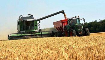 Ya ingresó el primer lote de trigo y se rematará en noviembre