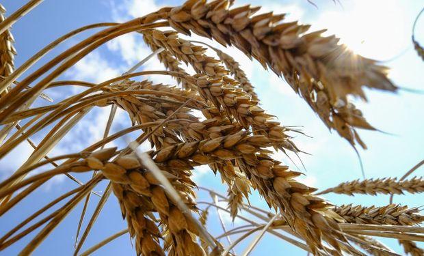Subas para el trigo en Chicago.