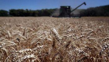 Se espera la peor cosecha de trigo de los últimos 5 años