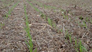 Stoller Argentina presenta el sistema que revolucionará la agricultura