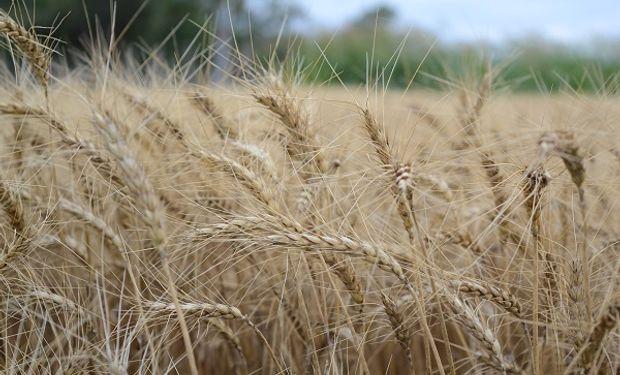Brasil es el principal comprador de trigo de Argentina.